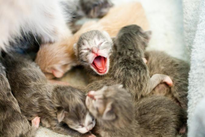 Banyak Pantang Larang Jaga Anak Kucing Jangan Sentuh Seminggu Pertama Elak Si Ibu Abaikannya I Suke Mstar