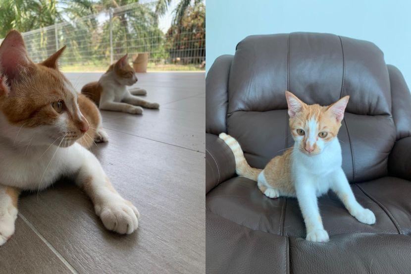 kucing t20  4